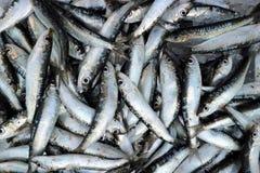 Sardinhas recentemente travadas na loja dos peixes Fundo e textura do alimento fotos de stock royalty free