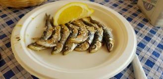 Sardinhas roasted frescas em spain Malaga imagens de stock royalty free