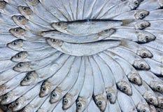Sardinhas salgadas Imagens de Stock Royalty Free