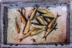 Sardinhas salgadas Fotografia de Stock