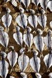 Sardinhas secadas Portugal Fotografia de Stock
