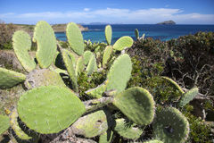 Sardinia Fotografia de Stock Royalty Free