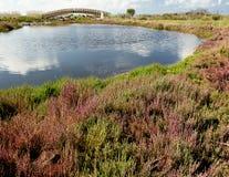 Sardinia, Cabras pond Stock Images