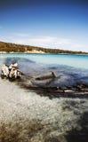 Sardinia caprera shipwreck beach Stock Images