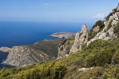 Sardinia djurliv Arkivbild
