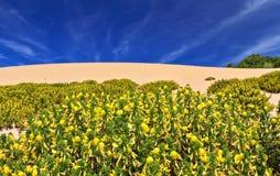 Free Sardinia - Flowered Dune Stock Photography - 56061792