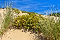 Sardinia - flowered dune Stock Photography