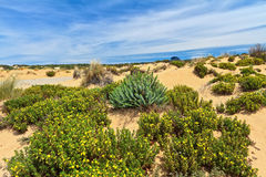 Sardinia - flowered dune Royalty Free Stock Image
