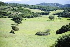 Sardinia.Green谷 免版税图库摄影
