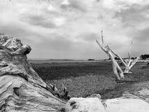 Sardinia italy. Poseidonia on beach in sardegna royalty free stock photos