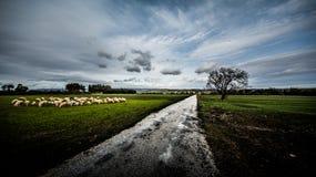 Sardinia krajobraz Zdjęcia Stock