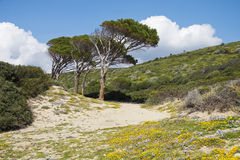 Sardinia landscape Royalty Free Stock Photography