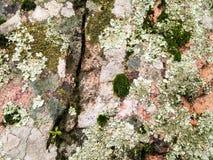 sardinia Naturalny środowisko Powulkaniczne skały zdjęcia stock