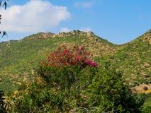 Sardinia's inland Royalty Free Stock Photography