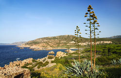 Sardinia shore and agave Royalty Free Stock Photo
