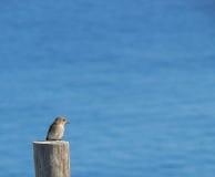 Sardinia. Solitary bird Royalty Free Stock Photography