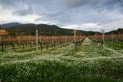 Free Sardinia. Sulcis. Agriculture Stock Photography - 87212592