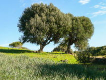 Sardinia. Sulcis Royalty Free Stock Images
