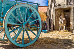 Sardinia, Tonara, rural scene Stock Photo
