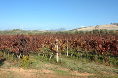 sardinia Vignoble Photos stock