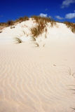 Sardinian dunes. Protected sand dunes in Sardinia Royalty Free Stock Image