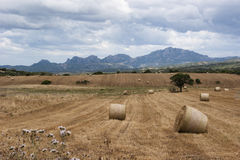 Sardinian harvest scene with mountains behind Royalty Free Stock Photography