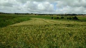 sardinien Landwirtschaftliche Landschaften Marmilla stock video footage
