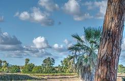 Sardisch landschap stock foto
