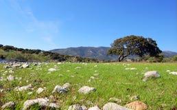 Sardynia krajobrazu Obraz Stock