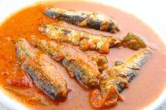 Sardynki ryba curry zdjęcie stock