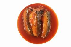 Sardynki W Pomidorowym Kumberlandzie Zdjęcia Stock