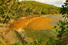 Sargassum spoiling a beach in the caribbean Royalty Free Stock Image