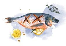 Sargo dos peixes da aquarela com limão e alecrins no fundo de у do ³ do blÐ Fotografia de Stock