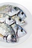 Sargo-Fische im weißen Teller Lizenzfreie Stockfotos