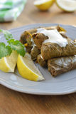 Sarma on a plate Royalty Free Stock Image