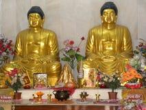 Sarnath, Uttar Pradesh, Indien - 1. November 2009 goldene Statuen vom Sitzen von Buddha an Maha Bodhi Society Buddhist-Tempel Stockbild