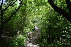 Sarospatak森林 库存照片