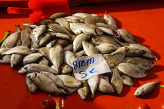 Sarpa salpa can cause hallucinations. Sarpa salpa ( Salema porgy ) can cause hallucinations when eaten, a common fish   at the weekly market  in Canakkale Stock Photography