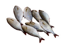 Sarpa salpa can cause hallucinations. Sarpa salpa ( Salema porgy ) can cause hallucinations when eaten, a common fish   at the weekly market  in Canakkale Royalty Free Stock Images