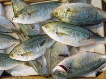 Sarpa salpa fish at the market Stock Photo