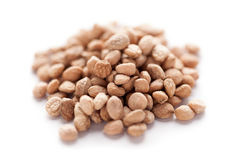 Sarpgandha Seeds (Rauvolfia serpentina). Collection of dry  Sarpgandha Seeds (Rauvolfia serpentina Royalty Free Stock Photo