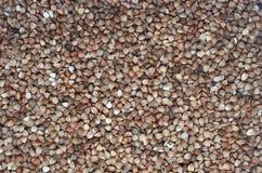 sarrasin sarrasin frais Fond sec de sarrasin Images stock