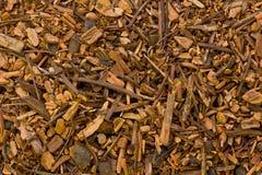 Sarsaparilla korzenia Hemidesmus indicus fotografia stock
