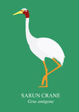 Sarus crane (Grus antigone). Stock Photos
