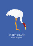 Sarus crane (Grus antigone). Royalty Free Stock Photography