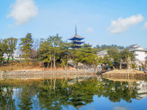 Sarusawa staw, Nara Fotografia Stock