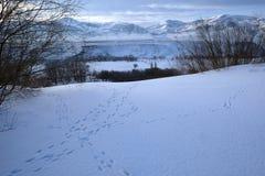 Sarykum barchan in winter and animal tracks Stock Photo