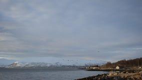 Sas进来为登陆的客机在Langnes机场, Tromsoe 股票录像