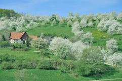Sasbachwalden,Black Forest,Germany Royalty Free Stock Photography