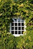 Sash Window. Old paneled sash window surrounded by green foliage Royalty Free Stock Photography